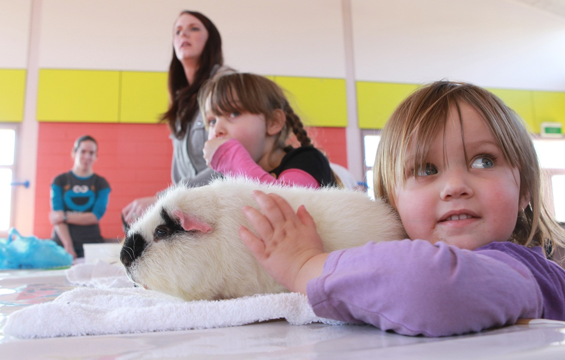 Canterbury Cavy and Rabbit Show, 2012
