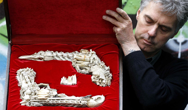 Wellington artist Bruce Mahalski with his set of duelling pistols made from animal bones.