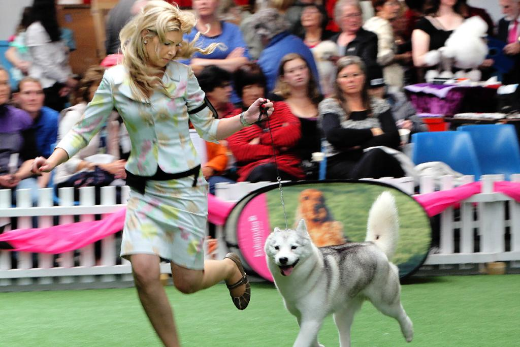 Tamzin Letele from Auckland, with her siberian husky Monday, was runner-up in the Utility Group section at the Eukanuba National Dog Show.