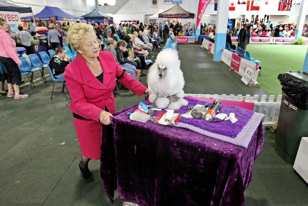 Pat Lovell from Tauranga with her toy poodle Rambo.