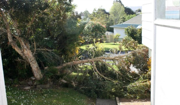 WILD WEATHER: This tree fell down in in Whangarei, temporarily trapping two boys underneath it.