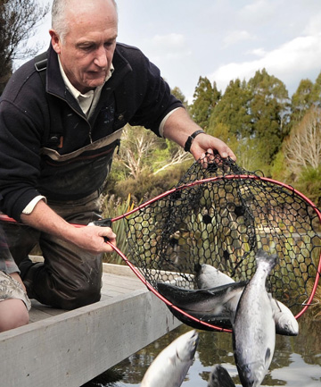 Fish and Game officer Bill Jarvie releases salmon delivered from Canterbury into one of two small lakes near Te Anau.