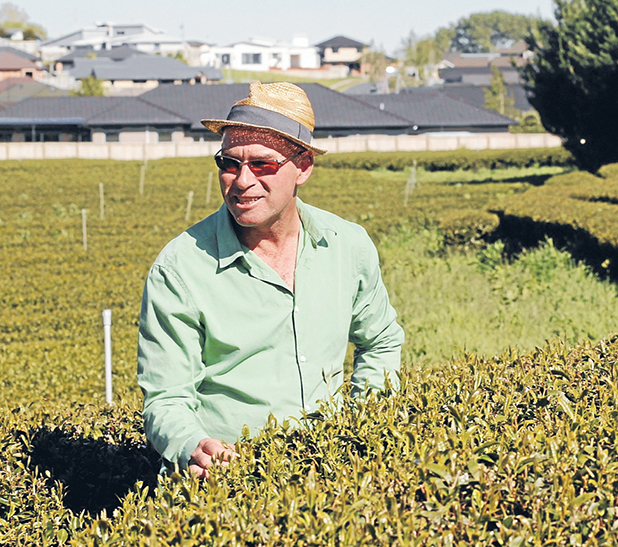 ICED TEA: Jeff Howell examines frost damage at Zealong's Borman Rd green tea plantation near Hamilton, which drew complaints from a nearby subdivision for using helicopters this week.