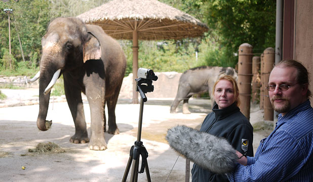 ELEPHANT IMITATES HUMANS: Researchers Angela Stoeger and Daniel Mietchen recording Koshik's vocalisations at the Everland Zoo in South Korea.