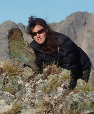 VITAL FUNCTION: University of Canterbury PhD student Laura Young is studying kea behaviour and how the bird  helps maintain native plant life.