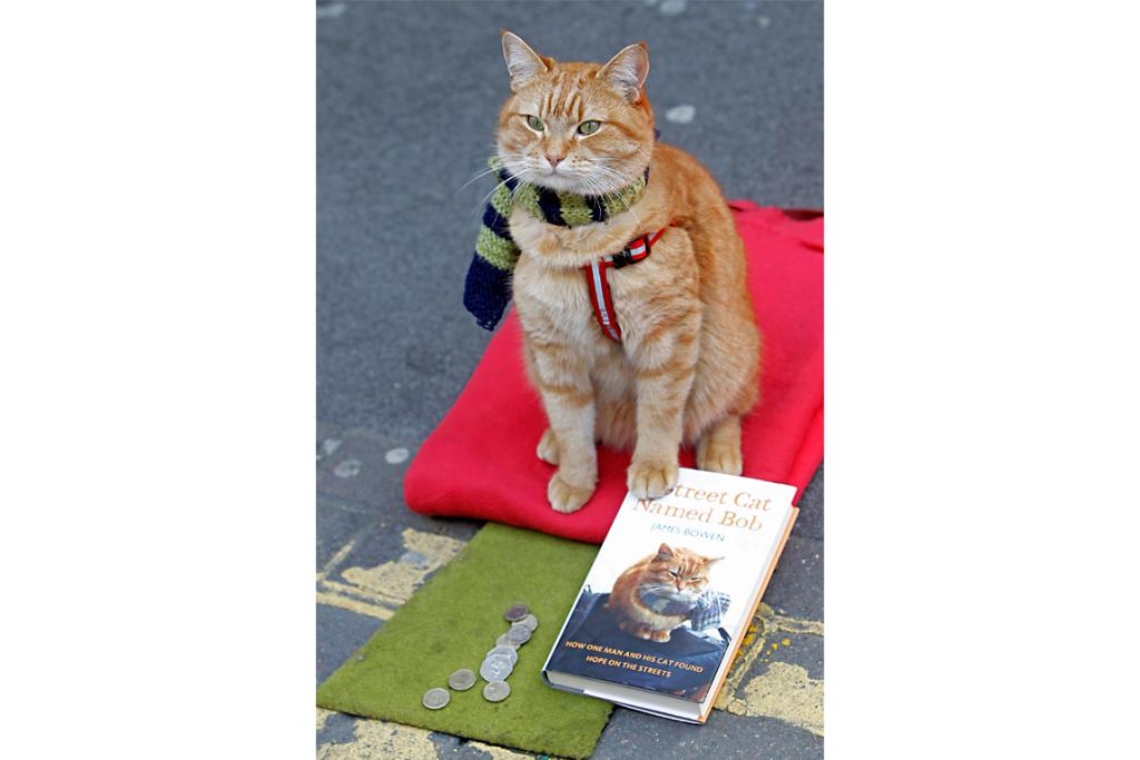 Cat Bob sits with the coins thrown to street musician James Bowen in London.