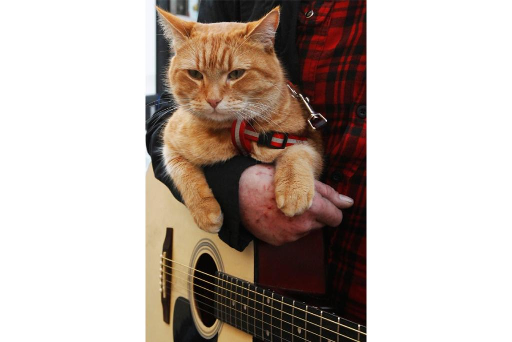 Cat Bob takes a break in the arms of his owner James Bowen in London.