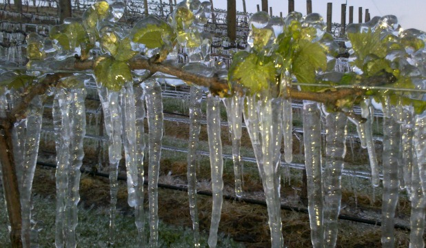 McArthur Ridge winery vineyard manager Murray Petrie took this picture during one of the hard frosts in Alexandra on November 4.