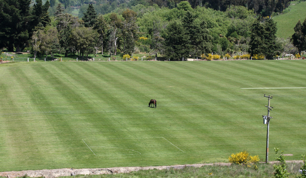HORSING AROUND: Bowling on the cricket pitch at TBHS school park may prove a bit sticky if this horse is still around.