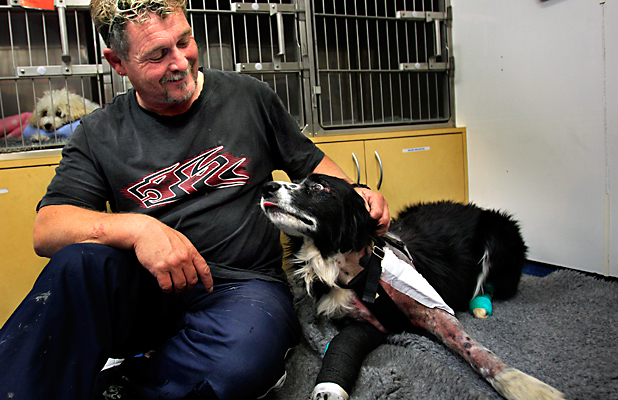 LUCKY: Luka, a border collie, has been in surgery at Massey University after being hit by a car, with owner Andrew Hardaker.