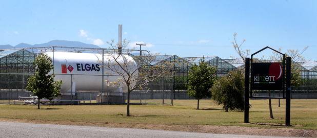 Not big enough: An Elgas tank at the Kinzett tomato-growing property on Old Renwick Rd, near Blenheim.