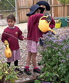 Burwood school vegetable garden