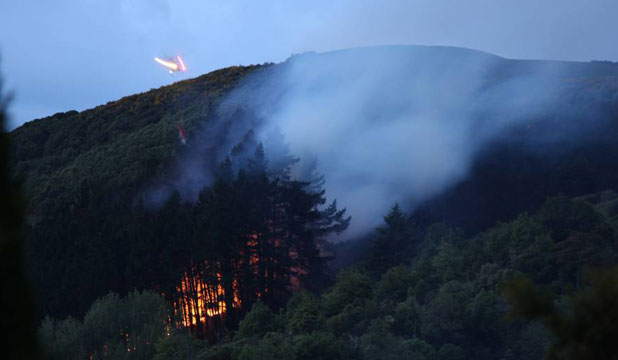 A fire burns in the pine forest on Nelson's Centre of New Zealand hill.