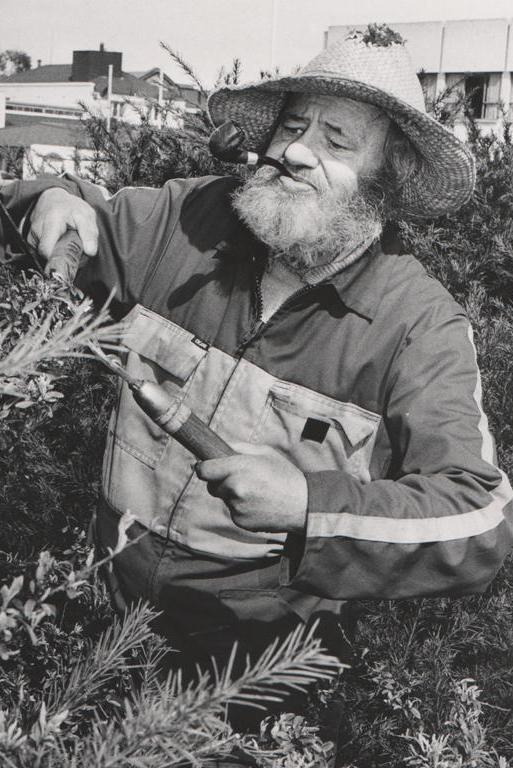 """GREEN THUMB: We've had some conflicting reports on the name of this mystery pic subject, but several readers have identified him as an employee of the Timaru City Council Parks and Reserves department during the 1970s under then-superindentent Bob Scott. UPDATE: Ann Oliver, in Australia, confirms his name was John Woods: """"He was my uncle and was a gardener with the Timaru council. He died in 1990."""""""