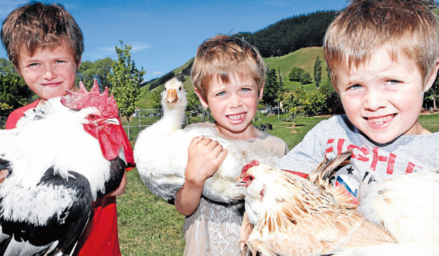 BIRDS OF A FEATHER Appleton brothers – Ben, 8, holding a dorking rooster;  Tom, 7, with  a gosling;  and Joe, 7, holding a faverolles hen –  will take their feathered friends to the Nelson Growables Garden Fair this weekend.