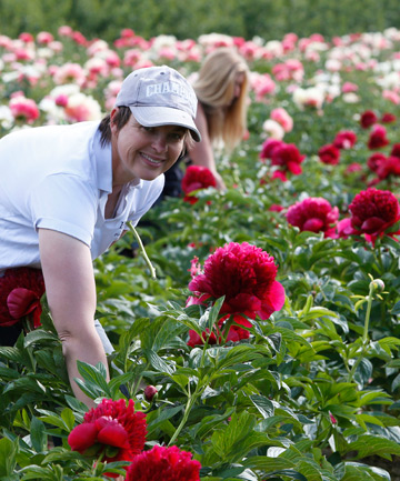 TOP CROP:  Michelle Kennedy, foreground, Carol Crowne and Ingrid Mitchell picking red charm flowers at Premier Paeonies in Foxhill.