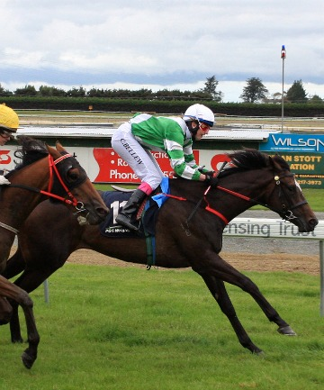 TALENTED: Sucre opens her 4-year-old campaign in race four at Winton tomorrow.