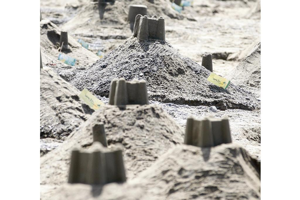 In one hour yesterday, more than 1000 people hurriedly built 1564 sandcastles in an hour at Lyall Bay Beach.