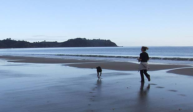 BYLAW OVERHAUL: Waiheke and Great Barrier islands will are exempt from standard  dogs-on-beaches times of the city's new regionwide dog policy.