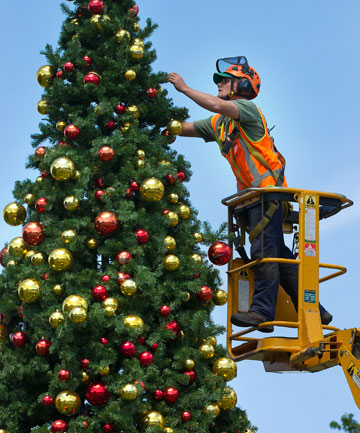 Greg Evans, an arborist at Palmertson North City Council, puts finishing the finishing touches to this year's Christmas tree.