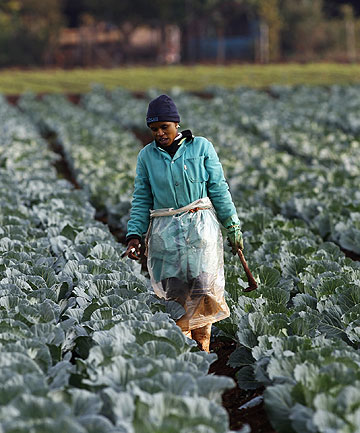 Plans drawn up under the first black South African president, Nelson Mandela, were meant by 2014 to hand over to blacks 30 percent of commercial farmland, which had been almost exclusively owned by whites, who form less than a tenth of the population. The government says so far it has achieved only 8 per cent, but still says wants to reach 30 per cent in two years.