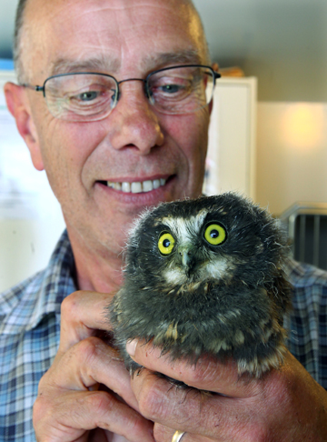 FEATHERED FRIEND: This five-week-old morepork is being cared for by Waikato wildlife rehabilitator Bill Smith after the bird was found wedged between a car and a surfboard that had driven down from Auckland to Hamilton.