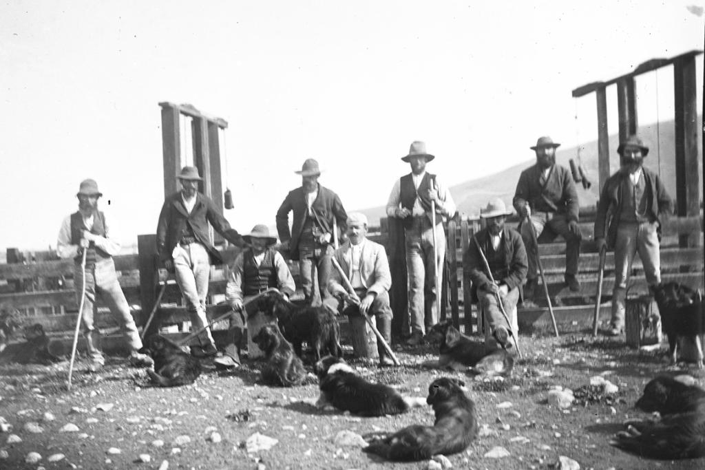 TOLL: James Dundas Hamilton, his musterers and shepherds with their dogs at Clayton Station circa 189).