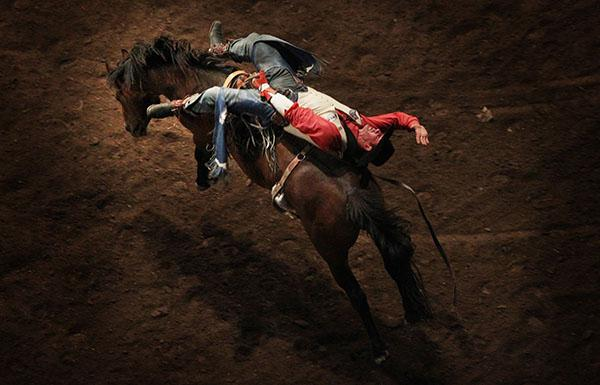 HOLD TIGHT: Australian bareback rider Cody Angland at the International Rodeo at Hamilton's Claudelands Arena.