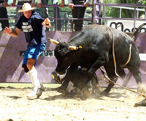 More than a bit of dust was kicked up at the weekend's Battle of the Bulls in Paeroa with local and international cowboys doing battle with one-tonne beasts, and themselves.