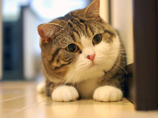 Cute Cats Gallery