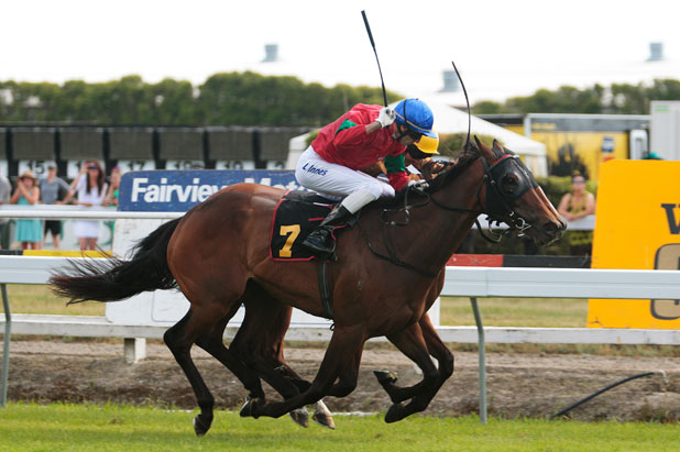 We're better: Leith Innes keeps a watchful eye on Better Together, almost totally obscured, as he guides Matamata mare Annie Higgins to victory in Saturday's Gr III Waikato Times Gold Cup at Te Rapa.