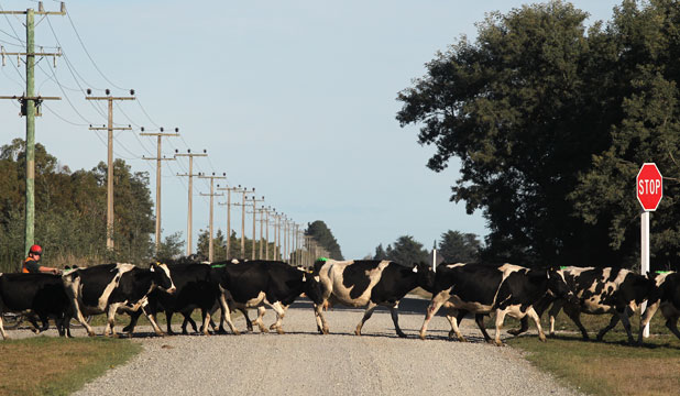 IN THE BLACK: Gypsy Day is when sharemilkers move their stock and belongings to new farms.