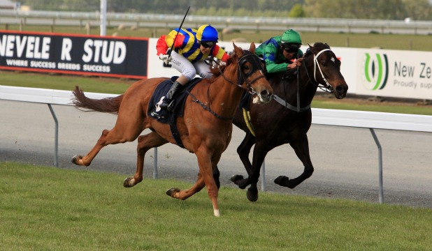 ROUND TWO: Recording, left, and Infallible renew their rivalry in the Mataura Licensing Trust Sprint at Gore tomorrow.