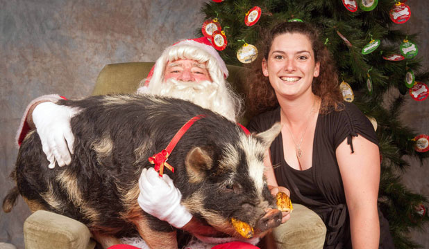 Bruce the kunekune pig was among the scores of animals snapped on Santa's lap this Christmas. His  owner is Cat Henderson, right. PICTURE BY JOHN FOSTER