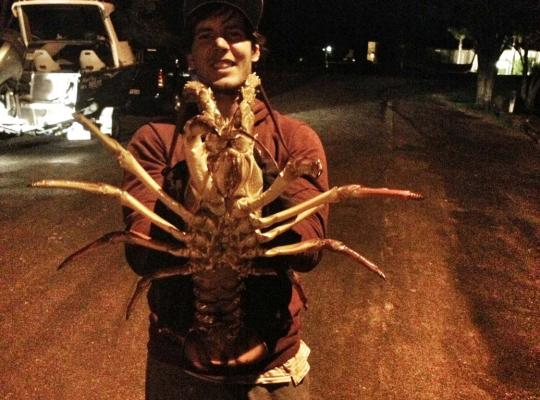 Giant crayfish