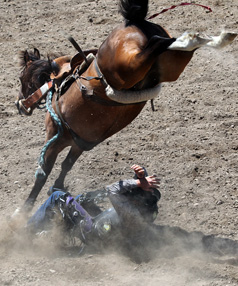 Cameron Wenn from Waganui gets bucked off at the Canterbury Rodeo in Mandeville, North Canterbury