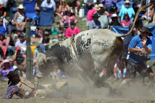 Darryn Bird from Christchurch falls off his bull at the Canterbury Rodeo in Mandeville, North Canterbury