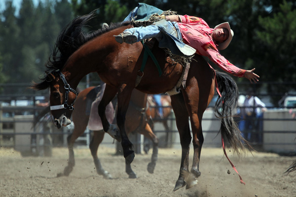 Rex Church gives it his all in the bareback ride at the Canterbury Rodeo in Mandeville, North Canterbury