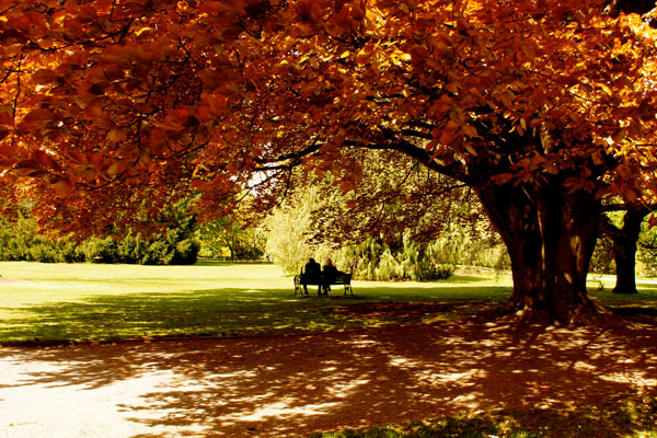 A seat for two in Hagley Park, Christchurch snapped by Jo Atara
