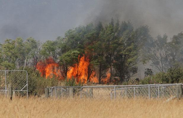 ABLAZE: Trees on fire off Selwyn Rd.