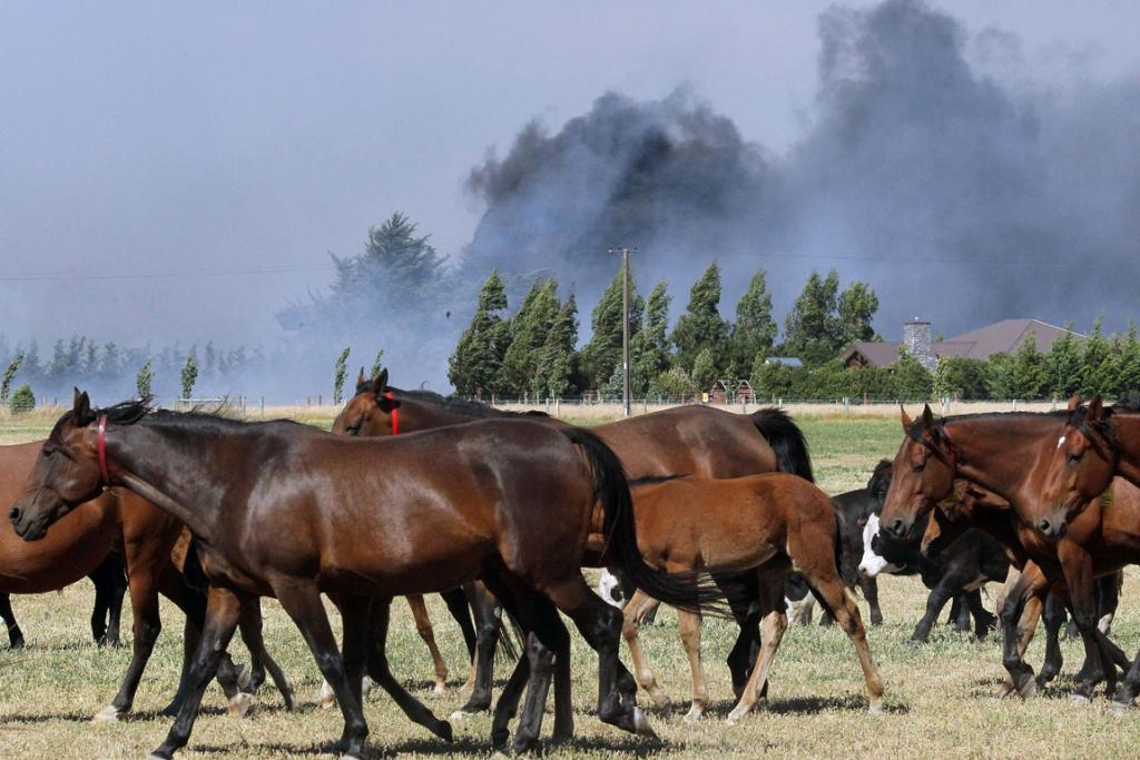 THREATENED: Horses are herded on Shands Rd.