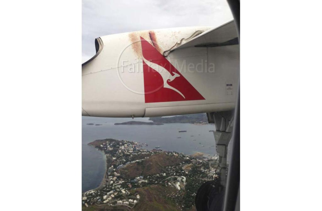 A snake tries to hang on during a flight from Cairns to Port Moresby.