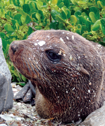 SEALED ROAD: A seal on the highway to Motueka