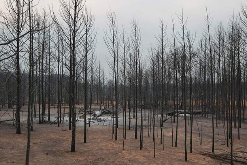 The changed landscape of Baradine Road at Coonabarabran, which was hit by one of New South Wales' worst bushfires in history.