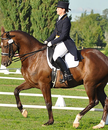 FINE STYLE: Nearly 200 dressage competitors will be in Clevedon at Anniversary weekend for the Auckland Dressage Championships.