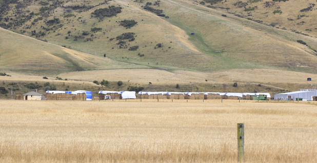 Hay stored ready for winter in the Wairau Valley
