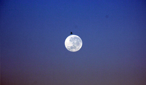 LUNAR LANDING: A lone seagull looks as if it is about to land on the moon in Chris Hogan's perfectly captured picture.