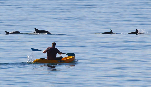 Lyall Bay dolphins