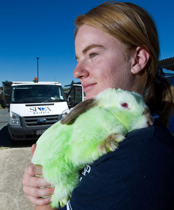 GREEN: Jess Woodcock hopes the owner of the green bunny will come forward.