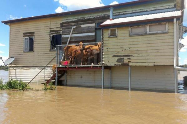 A resident looks on at a neighbourhood in Bundaberg during record flooding in the wake of Tropical Cyclone Oswald.